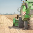 Stock Photo: Harvesting of soy bean