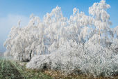 Landscape with snowy trees — Stock Photo