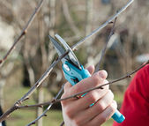 Pruning trees — Stock Photo