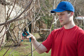 Guy pruning trees — Stock Photo