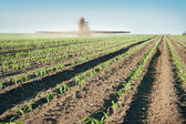 Tractor fertilizes crops — Stock Photo
