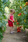 Girls picked tomatoes — Stockfoto