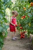 Meisjes geplukt tomaten — Stockfoto