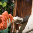 Stock Photo: Maintaining of wooden surfaces