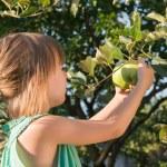 Little girl picking apple — Stock Photo