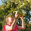 Little girl picking apple — Stock Photo