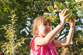 Little girl picking apple — Stockfoto