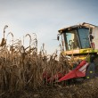 Stock Photo: Combine harvesting crop corn