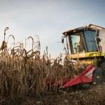 Combine harvesting crop corn — Stock Photo