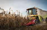 Combine harvesting crop corn — Stock Photo