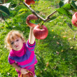 Stock Photo: Girl picked apples