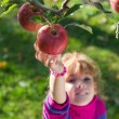 Stock Photo: Girl picked ripe apples