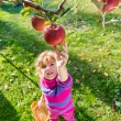 Little girl picked apples — Stock Photo