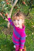 Mała dziewczynka zbierane jabłka — Zdjęcie stockowe