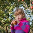 Stock Photo: Little girl picked apples