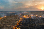 Burning of straw — Stock Photo