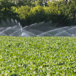 Stock Photo: Irrigation of vegetables