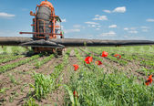 Tractor spraying soybean — Stock Photo