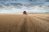 Soybean harvest — Stock Photo