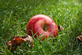 Rode appel — Stockfoto
