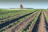 Tractor fertilizes crops corn — Stock Photo