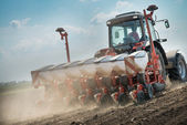 Wheat sowing  — Stock Photo