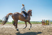 Girl riding a horse  — Stock Photo