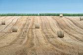 Straw bales on farmland — Stock Photo