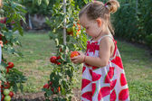 Little girls picked tomatoes  — Stock Photo