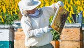 Trabajo de apicultor — Foto de Stock