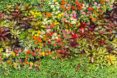 Abstract Nature Background, wall garden — Stock Photo