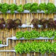 Hydroponic Vertical Gardening — Stock Photo #42266799