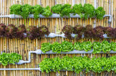 Hydroponic Vertical Gardening — Stock Photo