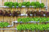 Hydroponic Vertical Gardening — ストック写真