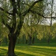 Green park in the sunshine in the evening — Stock Photo