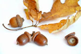 Three acorns next to the oak leaf on white background — Stock Photo