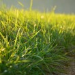 Green meadow in the sunshine in the evening — Stock Photo