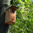 Bird box on the oak tree in the forest — Stock Photo