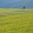 Tranquil life in a farm - lonely tree on green meadow — Stock Photo