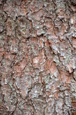 Close up photo of spruce tree bark — Stock Photo