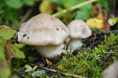 Macro photography of beautiful mushrooms in forest — Stock Photo