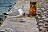 The gull on stone path in harbour — Stock Photo