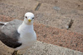 One sea gull stands on the steps and watches — Stock Photo
