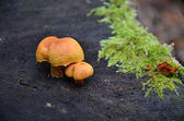 Macro photography mushrooms in forest — Stock Photo