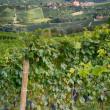 Barolo - Italy 2 — Stock Photo #38064443