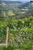 Barolo - Italy 2 — Stock Photo