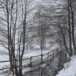 Wintry Scenery-1 — Stock Photo #39051709
