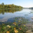 Seversky Donets river in autumn — Stock Photo