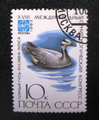 Stamp with the image of mountain goose — Stock Photo