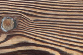 Larch tree wood texture — Stock Photo